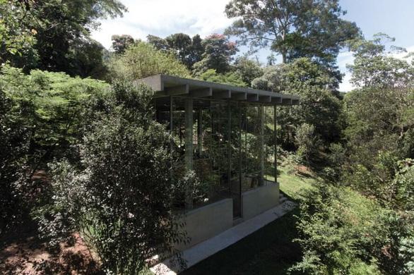 """Nhà kính """"lánh đời"""" của vị học giả giữa rừng nhiệt đới Brazil - Ảnh 4."""