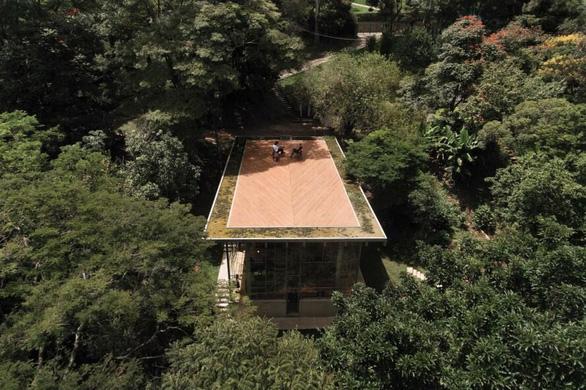 """Nhà kính """"lánh đời"""" của vị học giả giữa rừng nhiệt đới Brazil - Ảnh 8."""