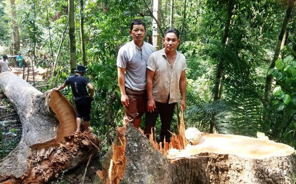 Xác định hai người xẻ thịt rừng phòng hộ ở Quảng Nam - Ảnh 1.