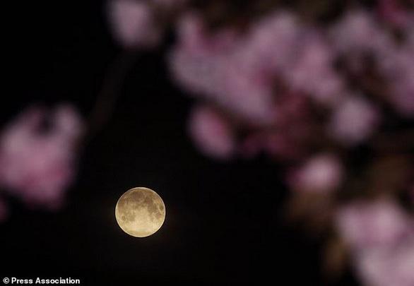 Ngắm trăng hồng đẹp lung linh trên trời đêm - Ảnh 4.