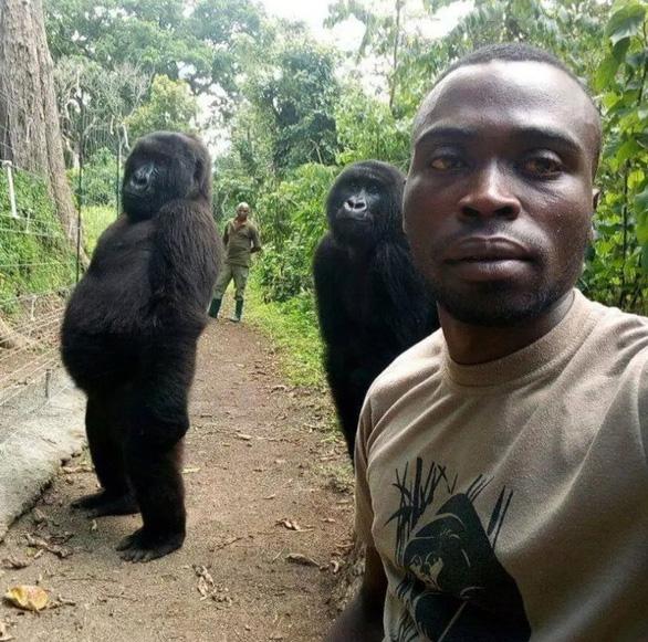 Khỉ đột tạo dáng chụp ảnh selfie cùng kiểm lâm - Ảnh 1.