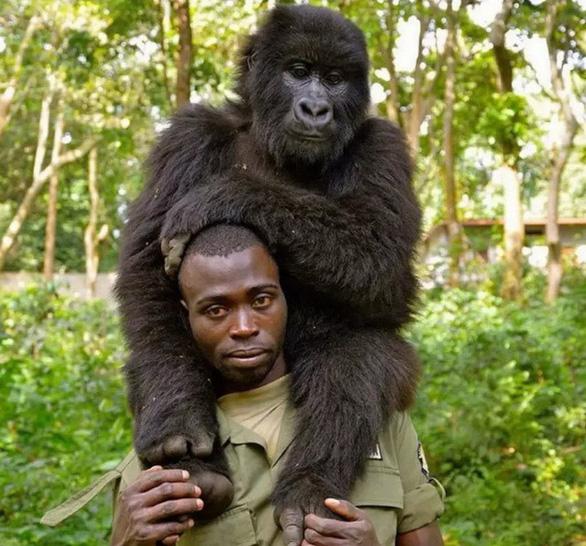 Khỉ đột tạo dáng chụp ảnh selfie cùng kiểm lâm - Ảnh 4.