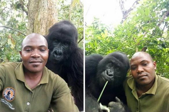 Khỉ đột tạo dáng chụp ảnh selfie cùng kiểm lâm - Ảnh 3.