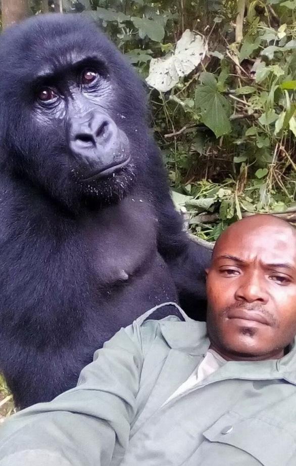 Khỉ đột tạo dáng chụp ảnh selfie cùng kiểm lâm - Ảnh 5.