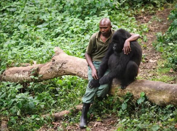 Khỉ đột tạo dáng chụp ảnh selfie cùng kiểm lâm - Ảnh 2.