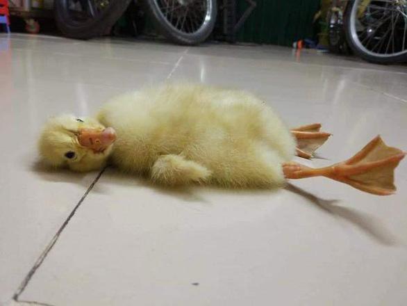 Nắng nóng làm nở trứng vịt lộn ở Việt Nam, nổ điện thoại ở Thái Lan? - Ảnh 1.