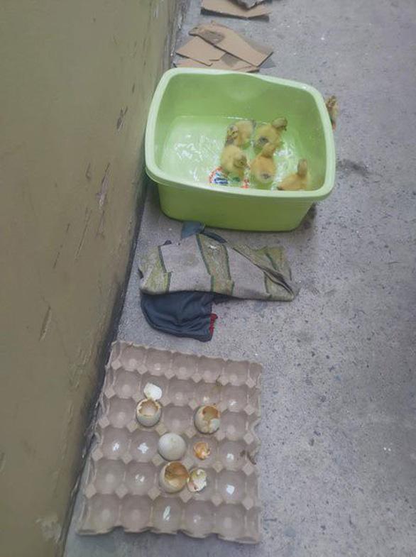Nắng nóng làm nở trứng vịt lộn ở Việt Nam, nổ điện thoại ở Thái Lan? - Ảnh 2.
