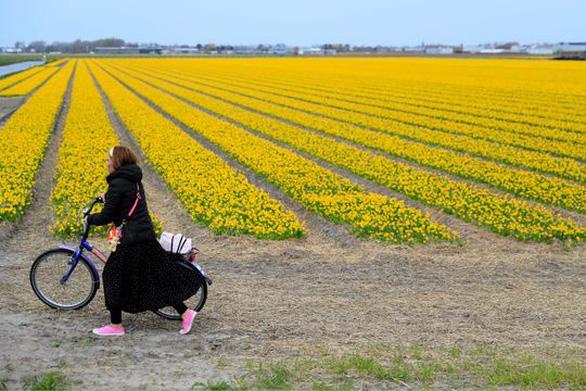 Những cánh đồng hoa dễ tan nát vì... ảnh ngàn like - Ảnh 2.