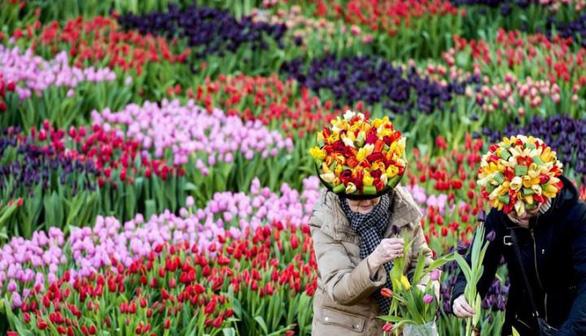 Những cánh đồng hoa dễ tan nát vì... ảnh ngàn like - Ảnh 4.