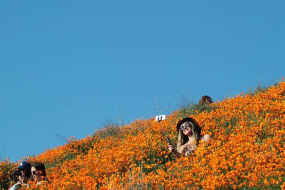 Những cánh đồng hoa dễ tan nát vì... ảnh ngàn like - Ảnh 5.
