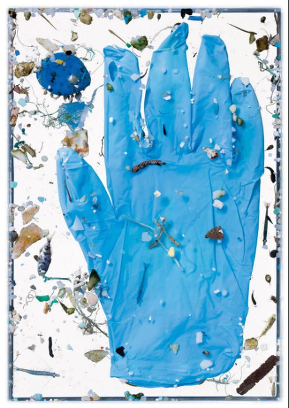 Báo động rác nhựa xuất hiện trong cá con - Ảnh 2.