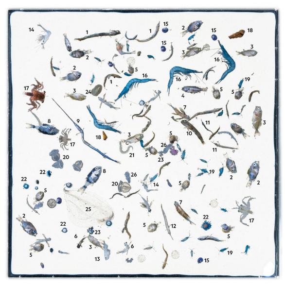 Báo động rác nhựa xuất hiện trong cá con - Ảnh 4.