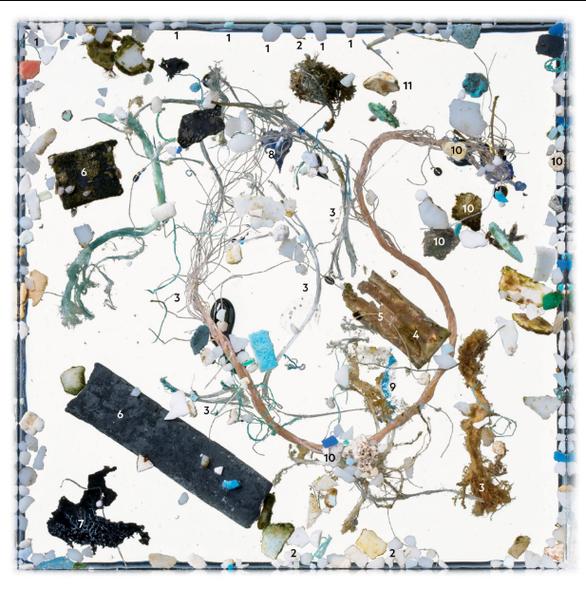 Báo động rác nhựa xuất hiện trong cá con - Ảnh 5.
