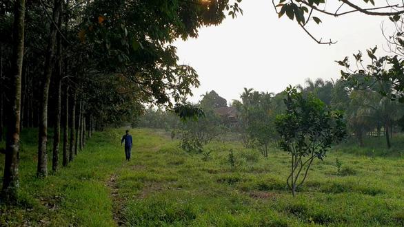 Kiểm tra việc giám đốc lâm trường chiếm đất rừng - Ảnh 1.