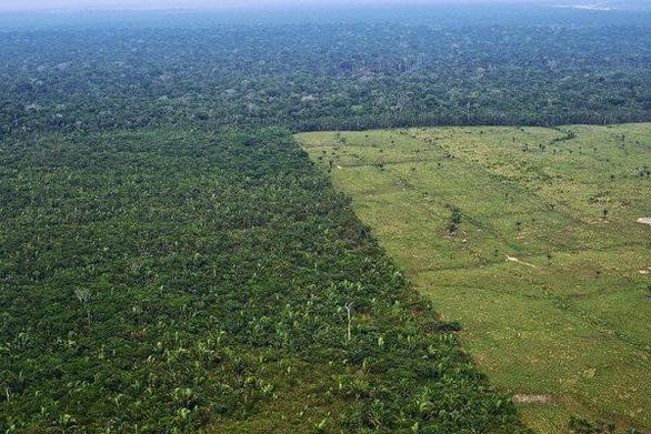 4 nước sở hữu lá phổi xanh của Trái đất đánh mất rừng nhiều nhất thế giới - Ảnh 3.