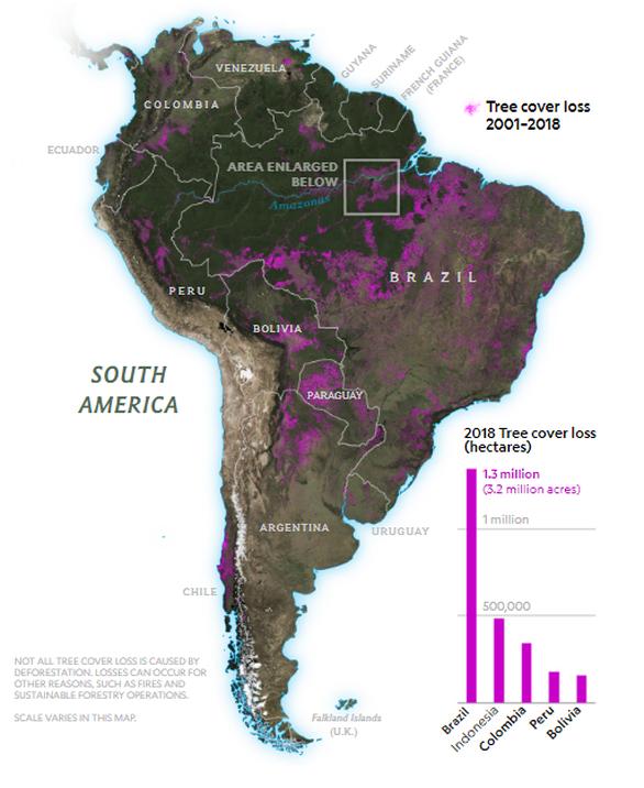 4 nước sở hữu lá phổi xanh của Trái đất đánh mất rừng nhiều nhất thế giới - Ảnh 2.
