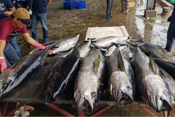 5.000 tấn cá nằm chờ xuất cảnh vì thông tư ngáng đường - Ảnh 1.