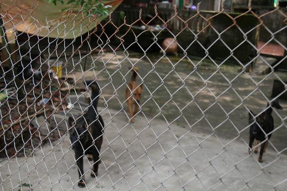 Bắt nhốt, lên phương án xử lý đàn chó cắn chết bé trai 7 tuổi - Ảnh 2.