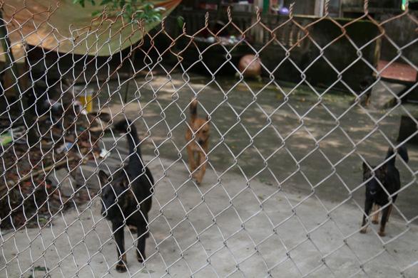 Đàn chó dữ cắn chết bé trai thường thả rông và từng cắn nhiều người - Ảnh 4.