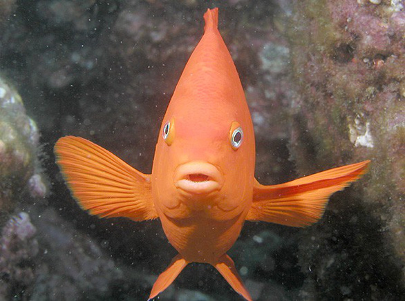 Phát hiện nhớt cá có thể diệt vi khuẩn kháng thuốc, tế bào ung thư - Ảnh 1.