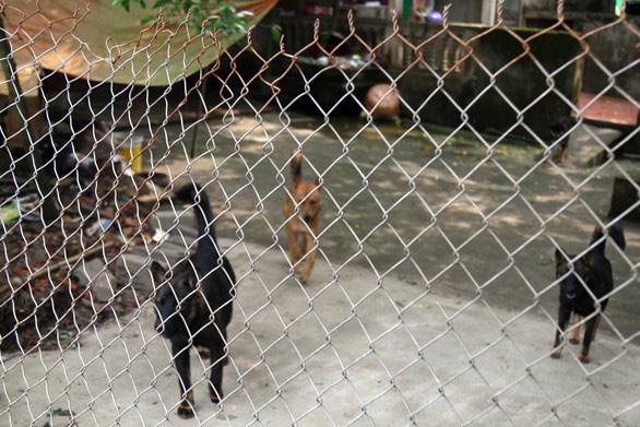 Chó cắn chết người, chủ nuôi phải bị xử lý hình sự - Ảnh 1.