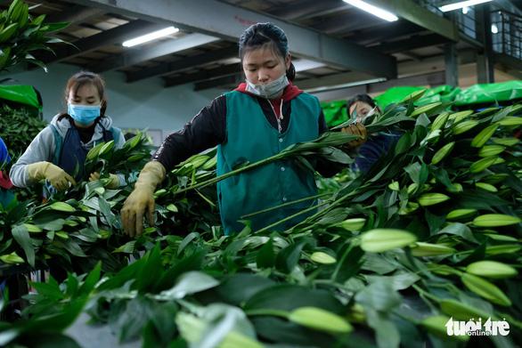 Nông sản Đà Lạt dự tính lên sàn Amazon - Ảnh 1.