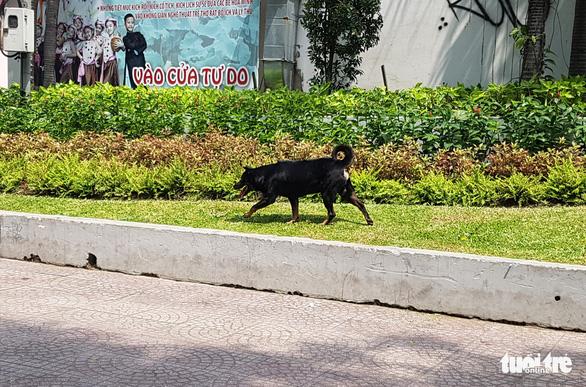 Vẫn còn nhiều chó thả rông ở trung tâm TP.HCM - Ảnh 4.
