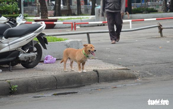 Vẫn còn nhiều chó thả rông ở trung tâm TP.HCM - Ảnh 2.