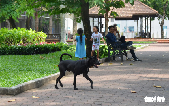 Vẫn còn nhiều chó thả rông ở trung tâm TP.HCM - Ảnh 3.