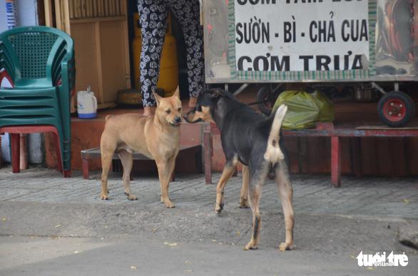 Vẫn còn nhiều chó thả rông ở trung tâm TP.HCM - Ảnh 1.