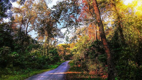 Khám phá rừng phong lá đỏ Tam Ban - Ảnh 1.