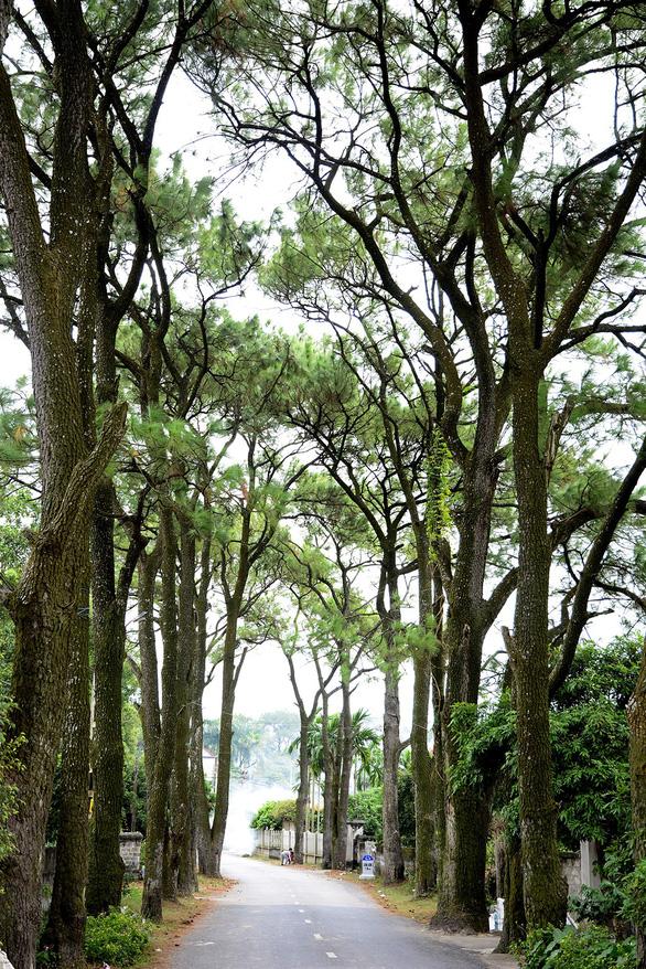 Khám phá rừng phong lá đỏ Tam Ban - Ảnh 2.