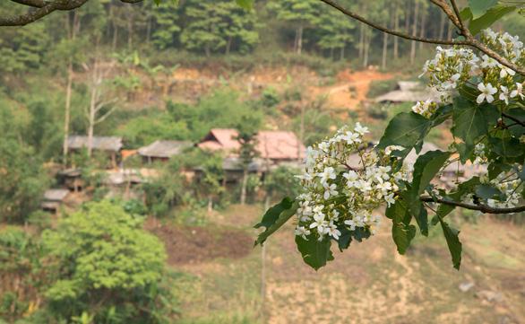 Tà Xùa mùa xuân muôn sắc hoa - Ảnh 6.