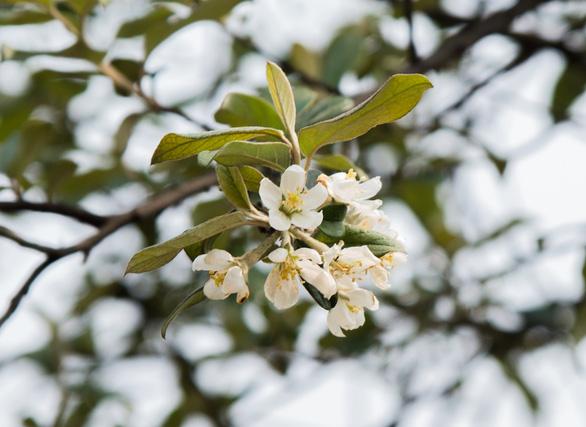 Tà Xùa mùa xuân muôn sắc hoa - Ảnh 9.