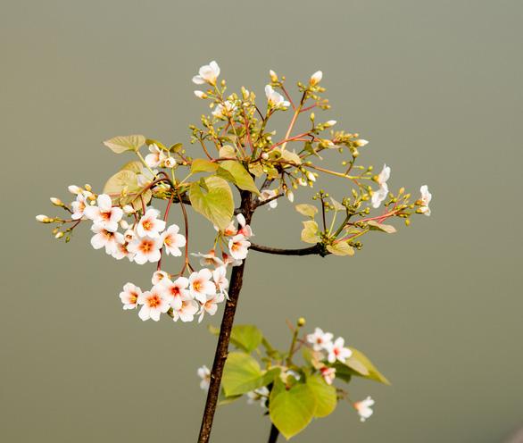 Tà Xùa mùa xuân muôn sắc hoa - Ảnh 8.