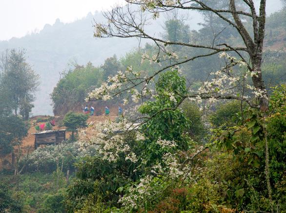Tà Xùa mùa xuân muôn sắc hoa - Ảnh 4.