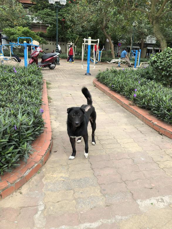 Huấn luyện chó dữ ở… công viên, người đi dạo phát khiếp - Ảnh 10.