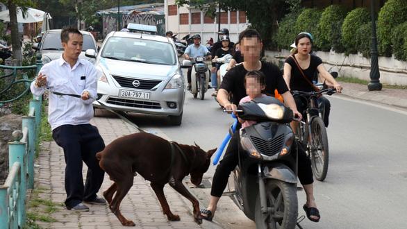 Cả xóm, cả công viên... xanh mặt với chó mặt xệ, chó becgiê Bỉ - Ảnh 1.