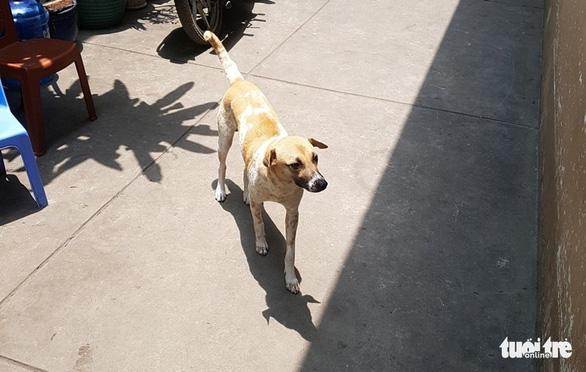 Vụ nhân viên ghi chỉ số nước bị chó cắn, đánh bể đầu: Con chó đã từng cắn người - Ảnh 2.