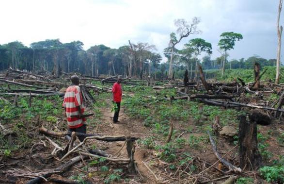 4 nước sở hữu lá phổi xanh của Trái đất đánh mất rừng nhiều nhất thế giới - Ảnh 1.