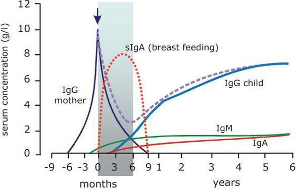 """IgG tự nhiên từ sữa non: """"Áo giáp"""" cho sức khỏe của trẻ - Ảnh 1."""