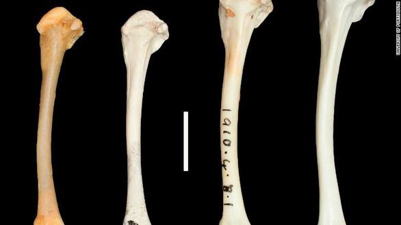 Loài chim cổ đại đã tuyệt chủng bỗng 'sống dậy - Ảnh 2.