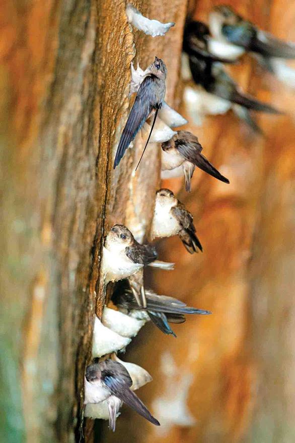 """Hội thảo khoa học """"Phát triển bền vững nghề nuôi chim yến tại Việt Nam"""" - Ảnh 3."""