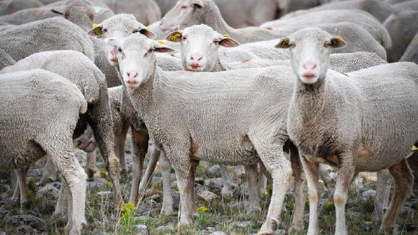 Đăng ký nhập học cho... cừu vì thiếu học sinh - Ảnh 1.