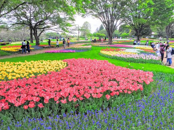 Tháng 5 đến Nhật Bản ngắm hoa nở muôn nơi  - Ảnh 1.
