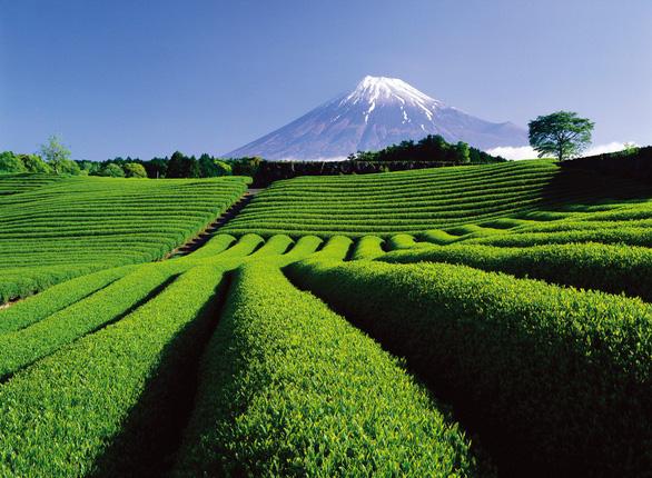 Tháng 5 đến Nhật Bản ngắm hoa nở muôn nơi  - Ảnh 2.