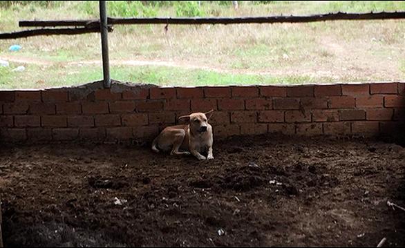 Chú chó giúp phát hiện thi thể bé trai 2 tuổi mất tích ở Bình Thuận - Ảnh 2.