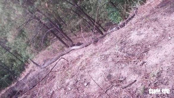 Còn nhiều rắn hổ mây khủng dưới chân Núi Cấm - Ảnh 2.