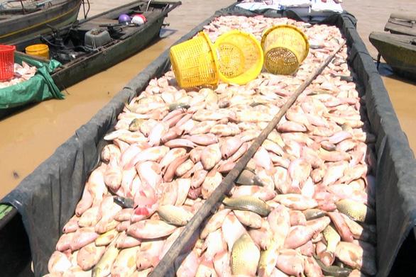 Dân nuôi cá trên sông La Ngà mất hơn 330 tấn - Ảnh 1.