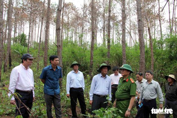 Khởi tố vụ ám sát 3.500 cây thông rừng hơn 20 năm tuổi - Ảnh 2.